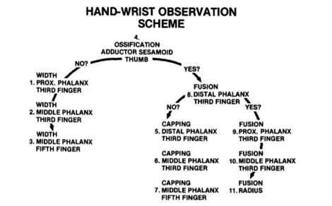 Hand-wrist Observation Scheme